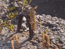 Rama floreciente del abedul al aire libre Foto de archivo