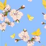 Rama floreciente del albaricoque Fotografía de archivo libre de regalías