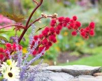 Rama floreciente roja Imagenes de archivo