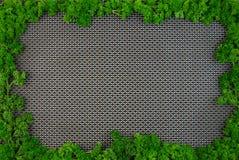 Rama greenery Obrazy Stock