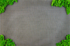 Rama greenery Obrazy Royalty Free