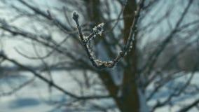 Rama helada del árbol almacen de video