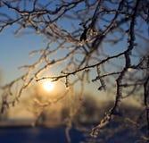 Rama hermosa con nieve Imágenes de archivo libres de regalías