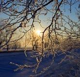 Rama hermosa con nieve Fotografía de archivo