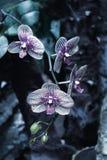 Rama hermosa de la orquídea en fondo borroso extracto Fotografía de archivo