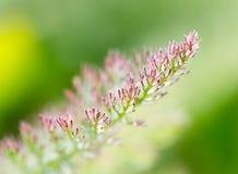 Rama hermosa de un árbol conífero en naturaleza Foto de archivo libre de regalías