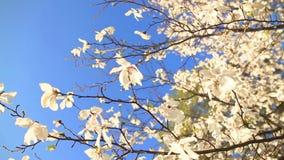 Rama hermosa del manzano almacen de metraje de vídeo