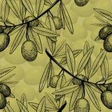 Rama inconsútil del bosquejo del modelo del olivo con las frutas fotos de archivo