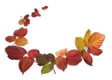 Rama jesień liście Ilustracja Wektor