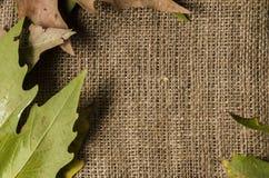 Rama jesień liście i wełny tło, opróżnia przestrzeń dla teksta fotografia stock