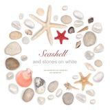 Rama kamienie i seashell na bielu Fotografia Royalty Free