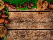 Rama kasztany, liście i cisawy rzep, zdjęcie stock