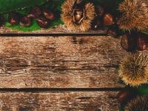 Rama kasztany, liście i cisawy rzep, zdjęcia royalty free