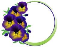 Rama kwiatów pansies Obraz Stock