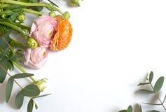 Rama kwiaty, ranunculus kwiaty i eukaliptus gałąź na białym tle, menchii i pomarańcze Mieszkanie nieatutowy, odg?rny widok fotografia royalty free