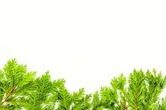 Rama lub tło z jałowem dla wizerunku edytorstwa, wizerunku projekt Jałowiec gałąź na białej tło odgórnego widoku kopii przestrzen Zdjęcia Stock