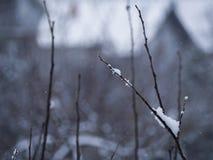 Rama maravillosamente nevada Fotografía de archivo