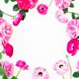 Rama menchii róża kwitnie i anemon na białym tle Mieszkanie nieatutowy, odgórny widok Kwitnie teksturę zdjęcia royalty free