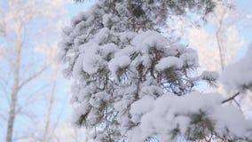 Rama nevada del abeto en parque del invierno en un fondo del cielo azul almacen de metraje de vídeo