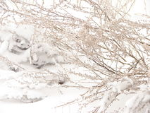 Rama Nevado Imagen de archivo