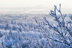 Rama Nevado en un bosque del invierno Fotografía de archivo