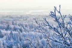 Rama Nevado en una opinión del invierno Fotos de archivo libres de regalías