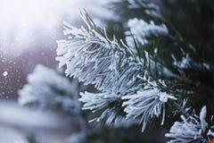 Rama nevosa del abeto del primer, paisaje del invierno imagen de archivo