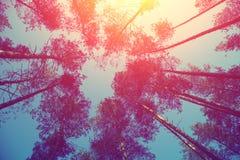 Rama od drzew przy zmierzchem Zdjęcia Royalty Free