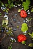 Rama od jagod i kwiatów Obraz Royalty Free