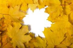 Rama od jesień liści odizolowywających na bielu zdjęcie stock