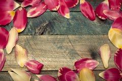 Rama od kolorowych tulipanowych płatków Fotografia Royalty Free