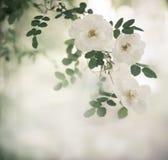 Rama od kwiatów na zamazanym natury tle Selekcyjna ostrość Obraz Royalty Free