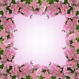 Rama od różowej azalii kwitnie w kwiacie zdjęcia stock