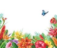Rama od tropikalnych kwiatów ilustracji
