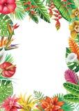 Rama od tropikalnych rośliien ilustracja wektor