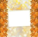 Rama otoñal anaranjada del árbol en fondo abstracto Imágenes de archivo libres de regalías