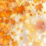 Rama otoñal anaranjada del árbol en fondo abstracto Foto de archivo