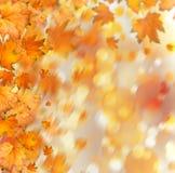 Rama otoñal anaranjada del árbol en fondo abstracto libre illustration