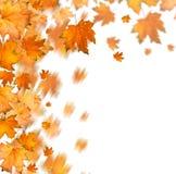 Rama otoñal anaranjada del árbol en fondo aislado imagen de archivo libre de regalías