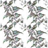 Rama púrpura del estragón de la artemisa con las hojas ilustración del vector