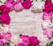 Rama peonie na drewnianym tle tła tła projektu karty kwiecista ilustracja Różowi i purpurowi wiosna kwiaty Zdjęcia Royalty Free