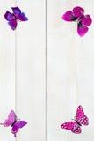 Rama plastikowa motylia dekoracja Zdjęcie Royalty Free