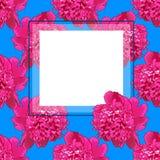 Rama Różowa peonia piękne Fotografia Stock