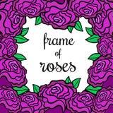 Rama róże Zdjęcie Stock