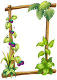 Rama robić drewno z winograd roślinami Fotografia Stock