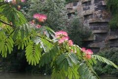 Rama rosada de las flores de la primavera Imagenes de archivo