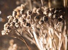 Rama seca de flores Primer Imágenes de archivo libres de regalías
