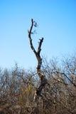 Rama solitaria en bosque de la zarza Foto de archivo libre de regalías