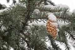 Rama Spruce cubierta con nieve Imagen de la referencia Imagen de archivo