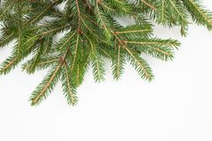 Rama Spruce en un fondo blanco Lugar para el texto Fotografía de archivo libre de regalías